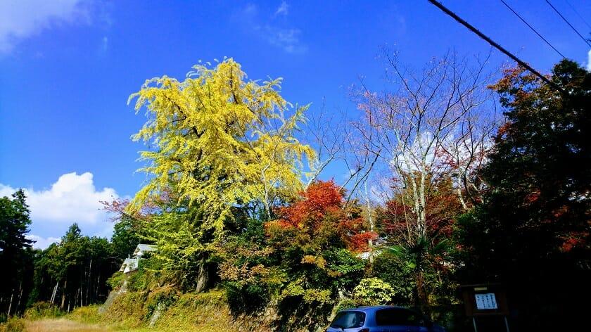 西恩寺の紅葉