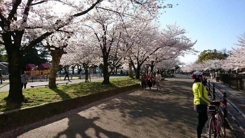 桜の金岡公園