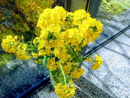 「菜の花忌」司馬遼太郎記念館