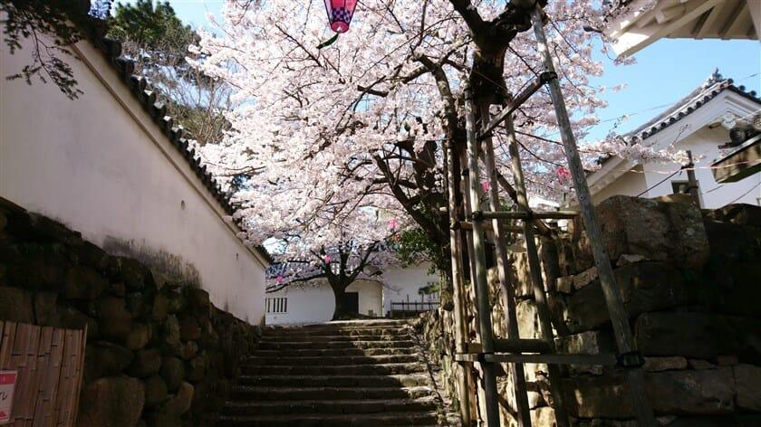 虎口(こぐち)を入った右手にある桜