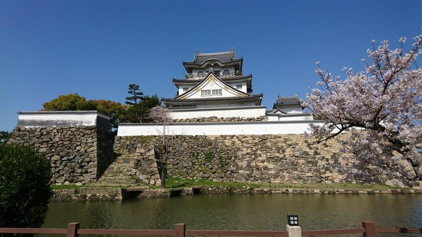 岸和田城と桜