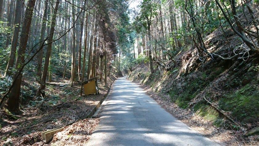 R50:杉林の中をゆく
