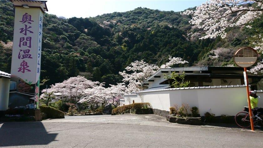 奥水間温泉の桜も満開