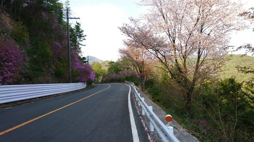 嵐山・高雄パークウェイ