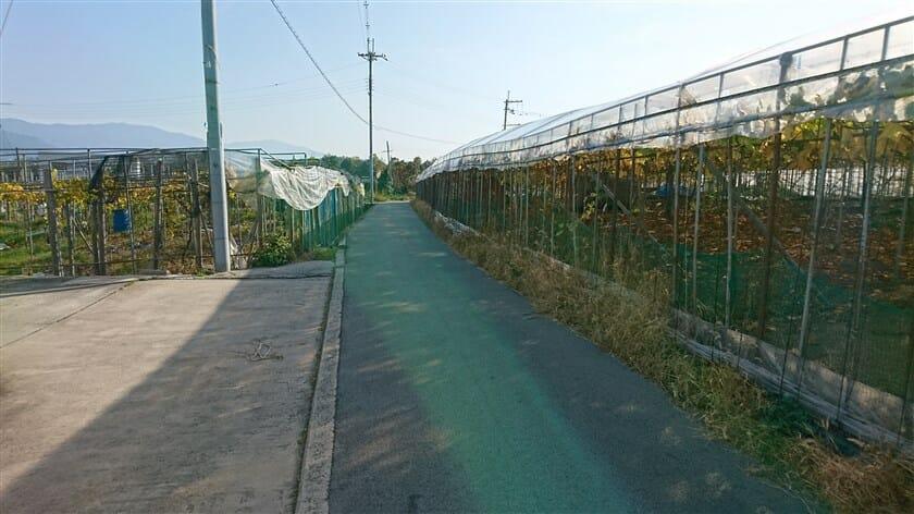 踏切を渡ると、ブドウ畑の中を通る道に出る