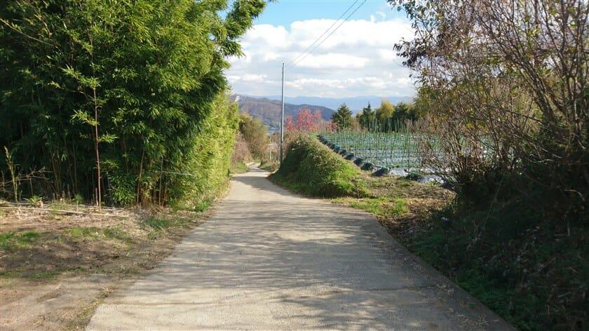 左折すると、竹林と畑の間道になる