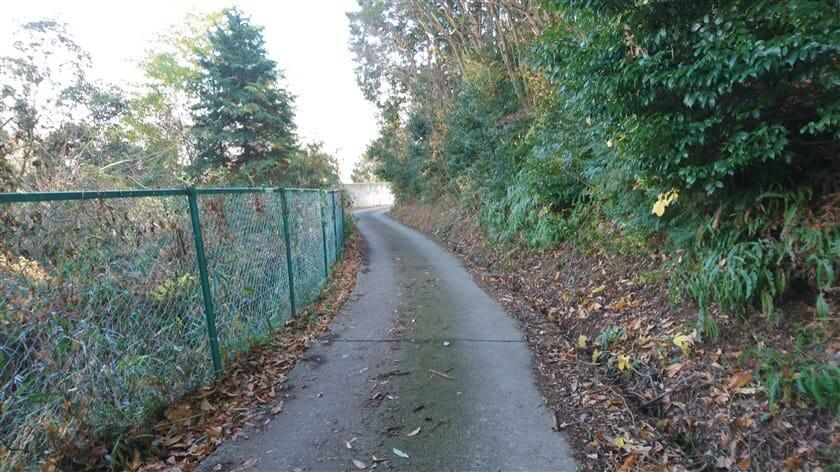 左にフェンスのある、林道になった