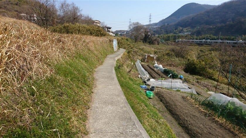 狭い道なのでゆっくり進むと、右の畑に落ちそうで怖い