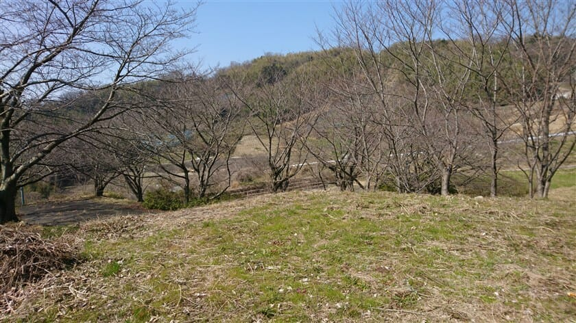 桜の里山公園:亀の瀬 8号園