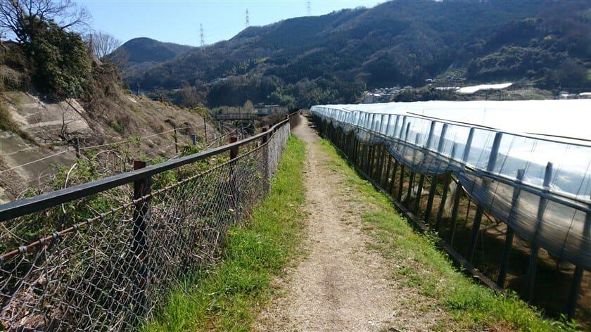 関西本線沿いの細い道