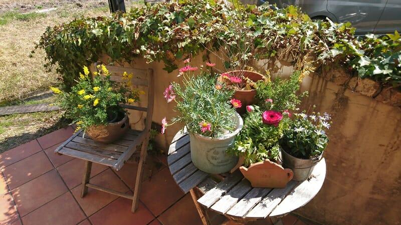 komorebi-garden_入り口に置いてあった、鉢植えの花々