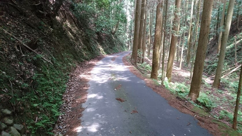 途中からは、杉林の林道になった