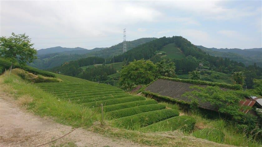 原山の円形茶園への道