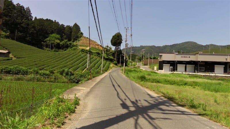 すぐに、茶畑の道に入る