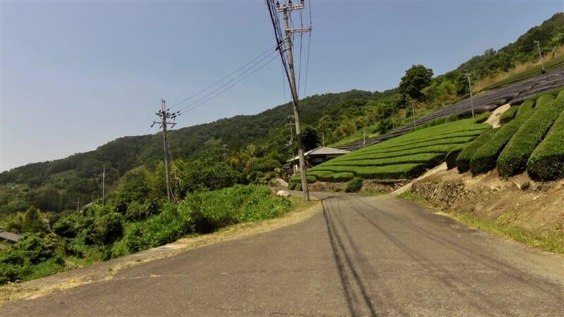 やっと緩やかな坂道になり、茶畑の裾を行く