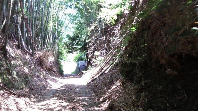 竹の落ち葉が幾重にも重なり、走れるところがない