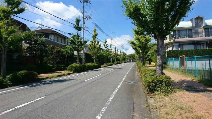 駐車場からの登り。整備された歩道と、街路樹のある広い道路になっている