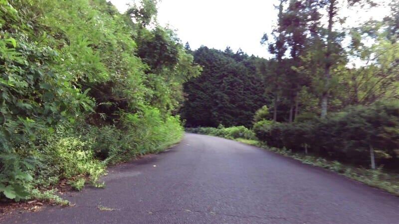 東側(右岸)の樹木がせりだした道路状況
