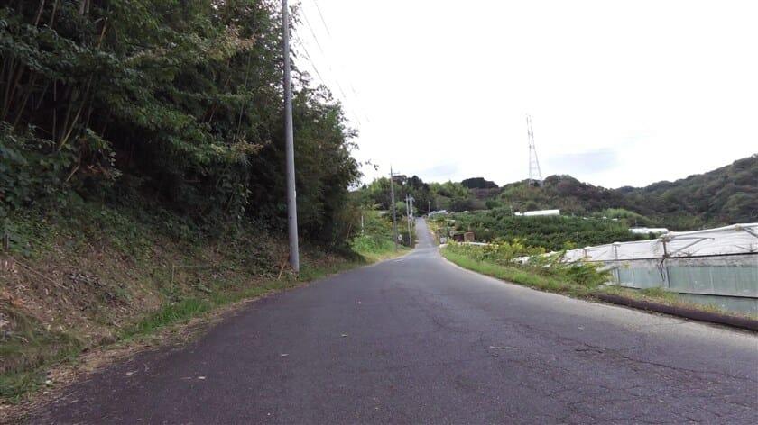 右側の道から登ると、道は広く一直線に登る