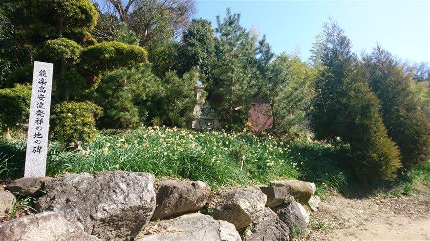 玉祖神社境内の南側に、スイセンの畑がある