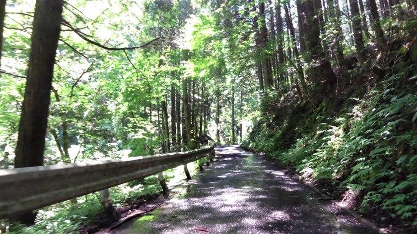 林道に入り、路面には木漏れ日がさしているが、落ち葉が敷き詰められ水浸し