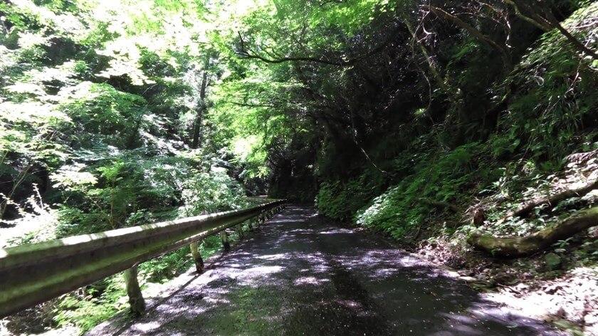 傾斜は緩やかだが、落ち葉と水浸しの道が続く