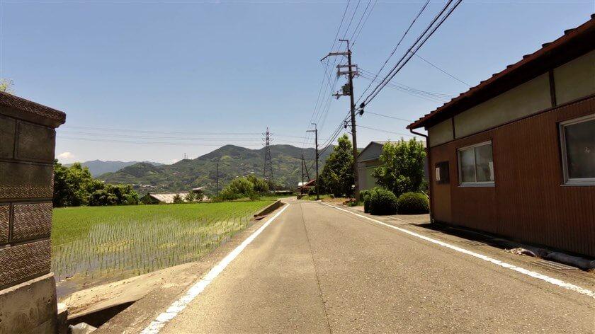 この地域には、柿の木が多くみられる