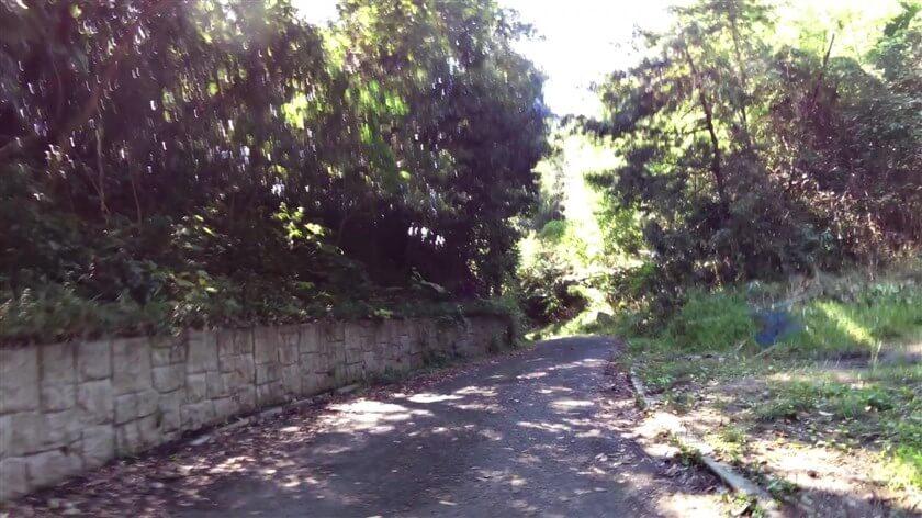 森の中の狭い道を走る