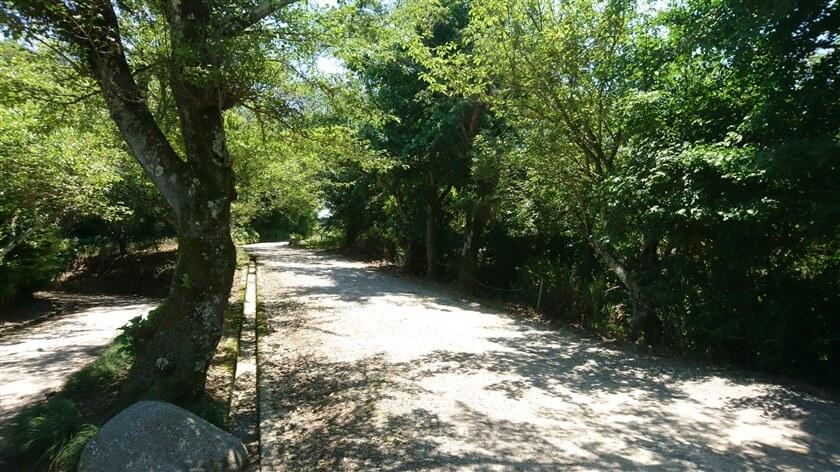 生駒縦走歩道の久安寺分岐点を左(南方面)に向かう