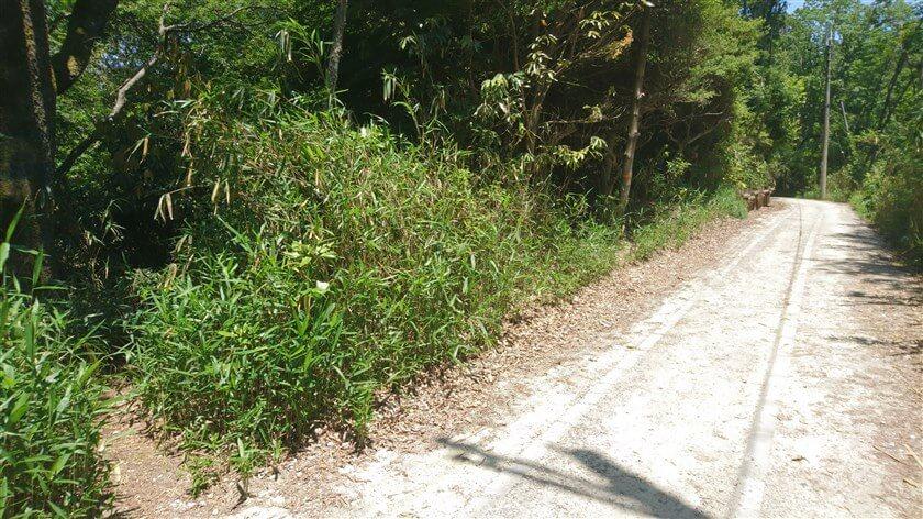 「高安山レーダー」で引き返す。高安山への登り口には、雑草が生い茂っている。
