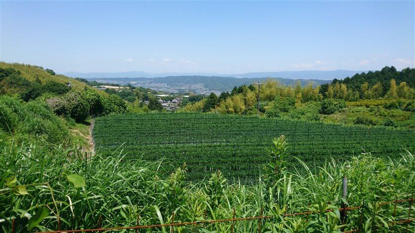 「小菊」越しに、生駒方面の市街が見える